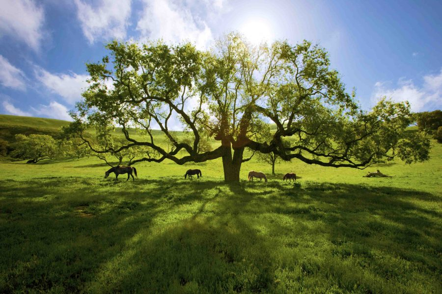 Santa Ynez Valley Photo Workshop